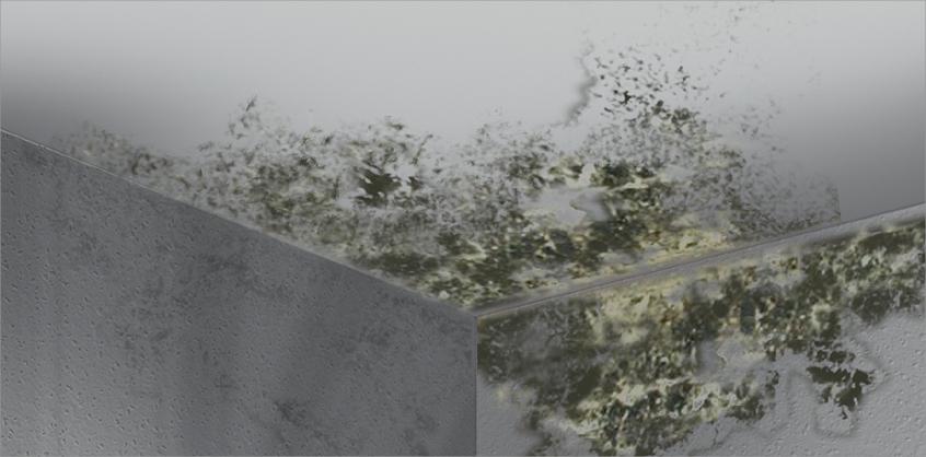 schimmel entferner schimmel vernichter anti schimmel schimmel schutz. Black Bedroom Furniture Sets. Home Design Ideas
